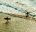 [予約/取寄せ]Saib. / Ipanema [CD] - ギターの音色に加え、ラテン・サウンドとカサブランカ・ビーツが絶妙!
