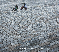 [予約/取寄せ] A June & J Beat / 216Project's Life [CD] - ワールドワイドな豪華メンバーが集結!