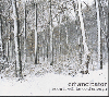 [再入荷待ち]Emancipator / Soon It Will Be Cold Enough (CD)