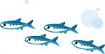 令和3年度 津江漁協 鮎 1日券(※釣行日・ご年齢を備考欄にお伝え下さい※クレジット決済不可!!)