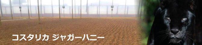 【コスタリカ・ジャガー ハニー】 生豆220gを受注後焙煎【数量限定】