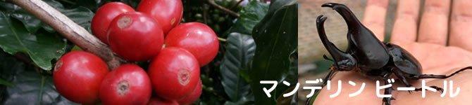 【マンデリン・ビートル】 生豆220gを受注後焙煎【画像2】