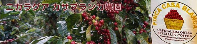 【カサブランカ農園ハイランドパカマラ】 生豆220gを受注後焙煎【数量限定】【画像2】