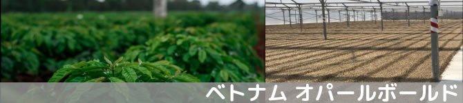 【オパールボールド】 生豆220gを受注後焙煎