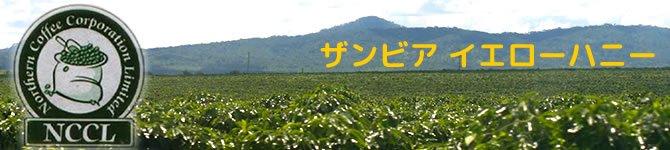 【ザンビア イエローハニー】 生豆220gを受注後焙煎【限定販売】
