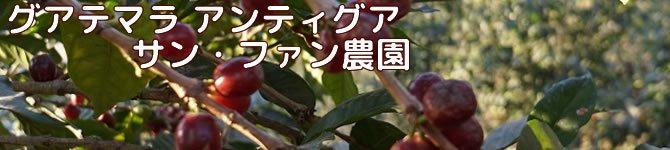 【サン・ファン農園】 生豆220gを受注後焙煎【限定】【画像2】