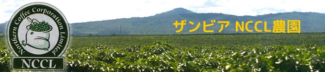 【ザンビア NCCL農園】 生豆220gを受注後焙煎【限定販売】【画像2】