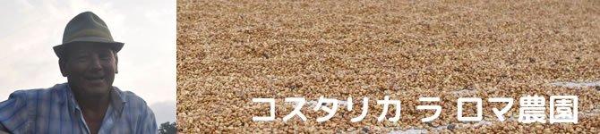 【コスタリカ ラ・ロマ農園 ホワイトハニー】 生豆220gを受注後焙煎【数量限定】【画像2】