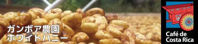 【コスタリカ・ガンボア農園ホワイトハニー】 生豆220gを受注後焙煎【数量限定】【画像2】