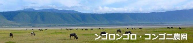 【タンザニア・ンゴロンゴロ コンゴニ農園】 生豆220gを受注後焙煎【限定発売】【画像2】