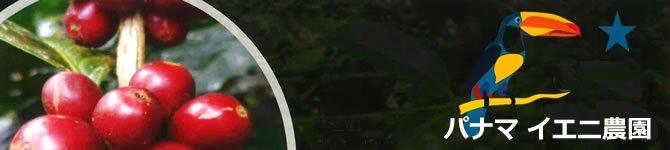 【パナマ・イエニ農園】 生豆220gを受注後焙煎【限定販売】【画像2】