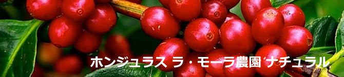 【ホンジュラス ラ・モーラ農園ナチュラル】生豆220gを受注後焙煎【限定】