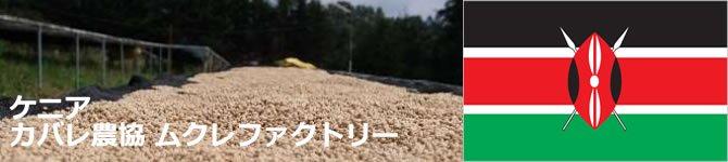 【ケニア カバレ農協ムクレファクトリー】 生豆220gを受注後焙煎【限定】【画像2】