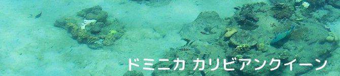 【ドミニカ カリビアンクイーン】 生豆220gを受注後焙煎【限定】【画像2】
