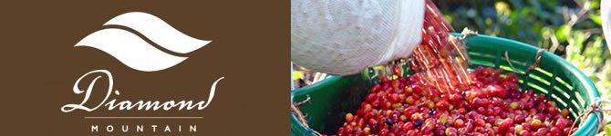 【パナマ・ダイヤモンドマウンテン】 生豆220gを受注後焙煎【限定販売】【画像2】