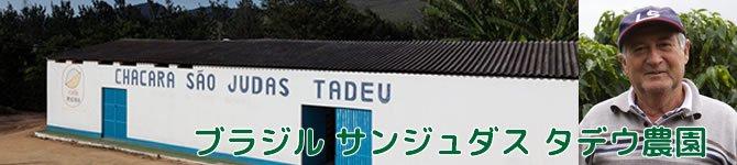 【ブラジル・サンジュダス タデウ農園】 生豆220gを受注後焙煎【限定】【画像2】