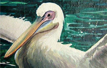 モモイロペリカン--ラフエッジのアクリル画--