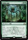 孵卵場の蜘蛛【レア】