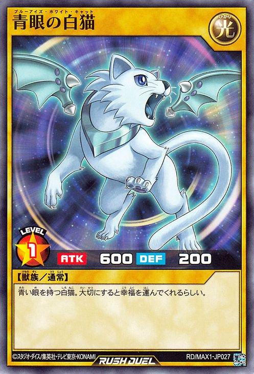 青眼の白猫