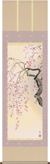 掛け軸-桜花爛漫/森山 観月