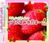 「ゆきんこ・りえしょんのいちごまみれだよ〜」ラジオCD10カゴめ【出演】五十嵐裕美さん/村川梨衣さん